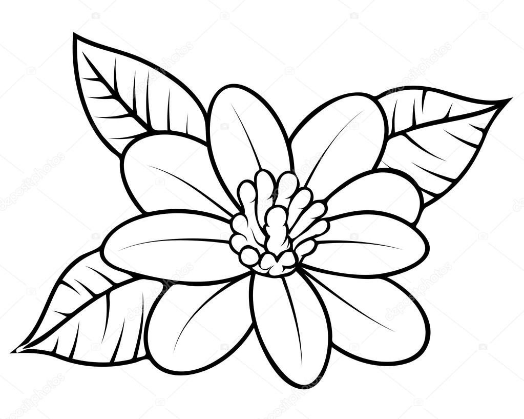 abstract coloring pages for adults - stock illustration wild flower sketching