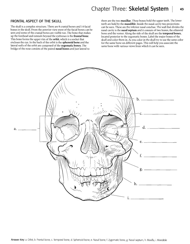 23 Anatomy and Physiology Coloring Workbook Answers Chapter 11 Page ...