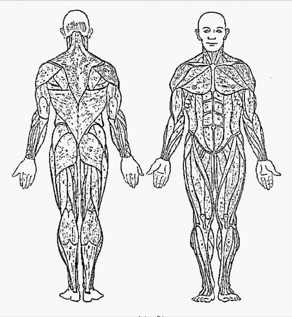 Anatomy Coloring Pages - Muscles Coloring Pages Anatomy Muscle Coloring Pages for