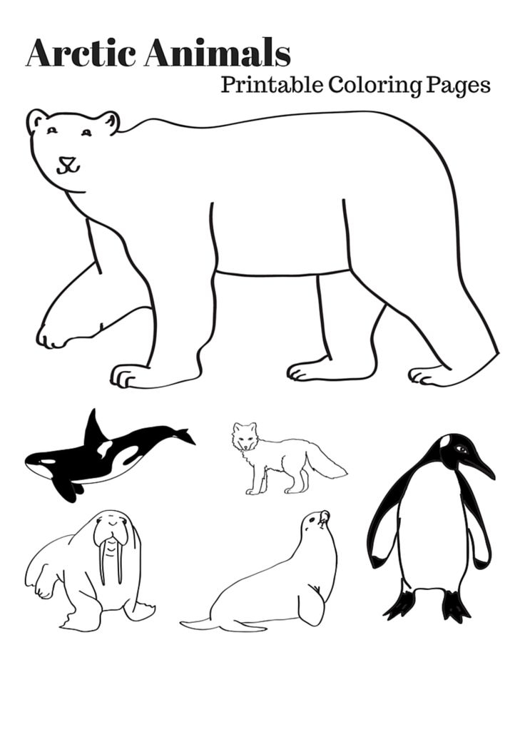 arctic animals coloring pages - arctic animals