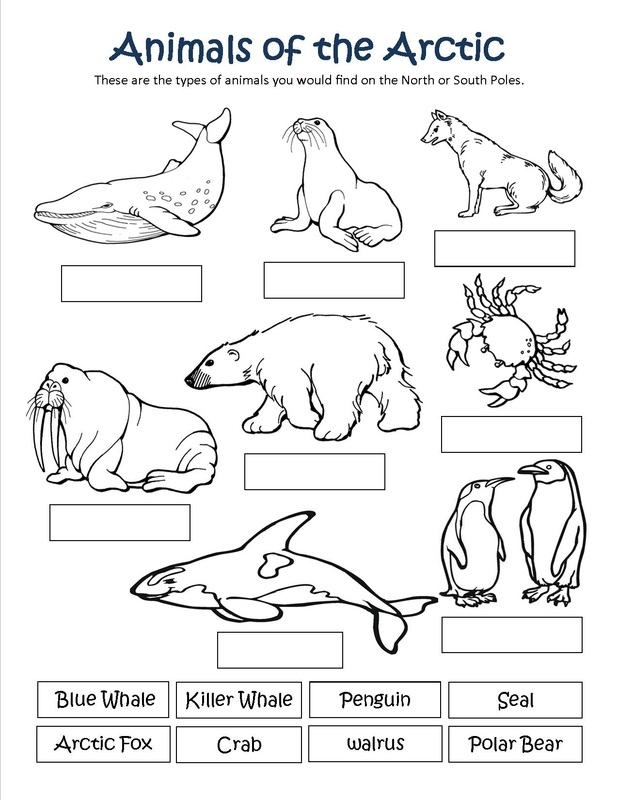 arctic animals coloring pages - q=habitat