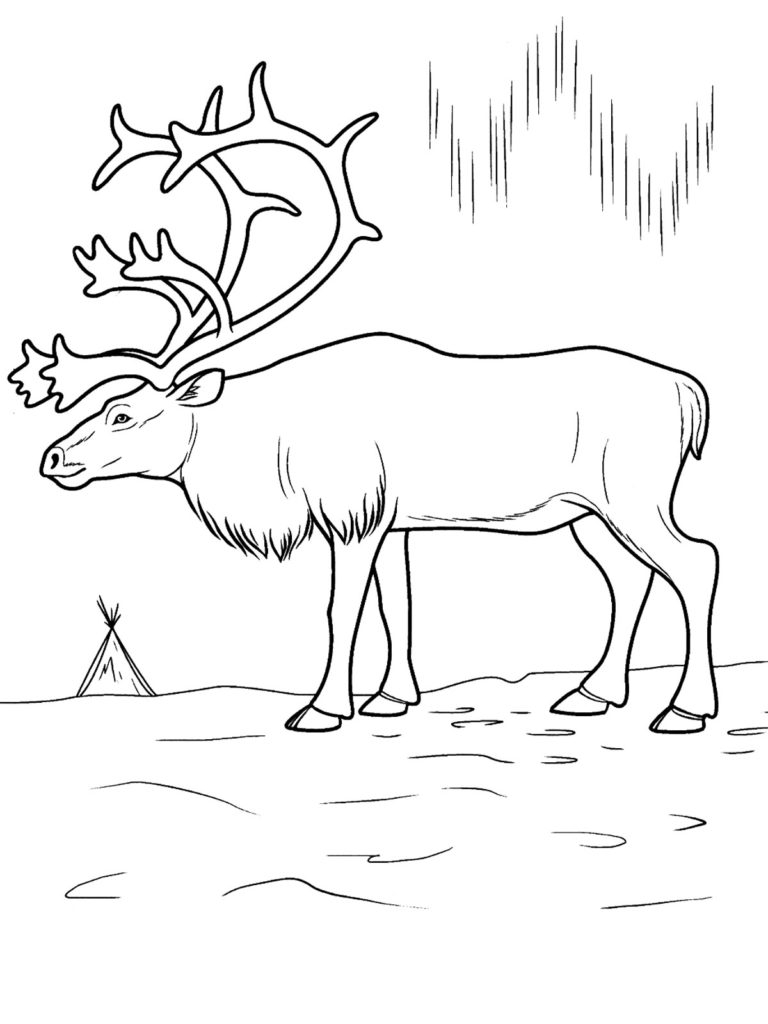 arctic animals coloring pages - printable arctic animal coloring pages coloring pages now 2
