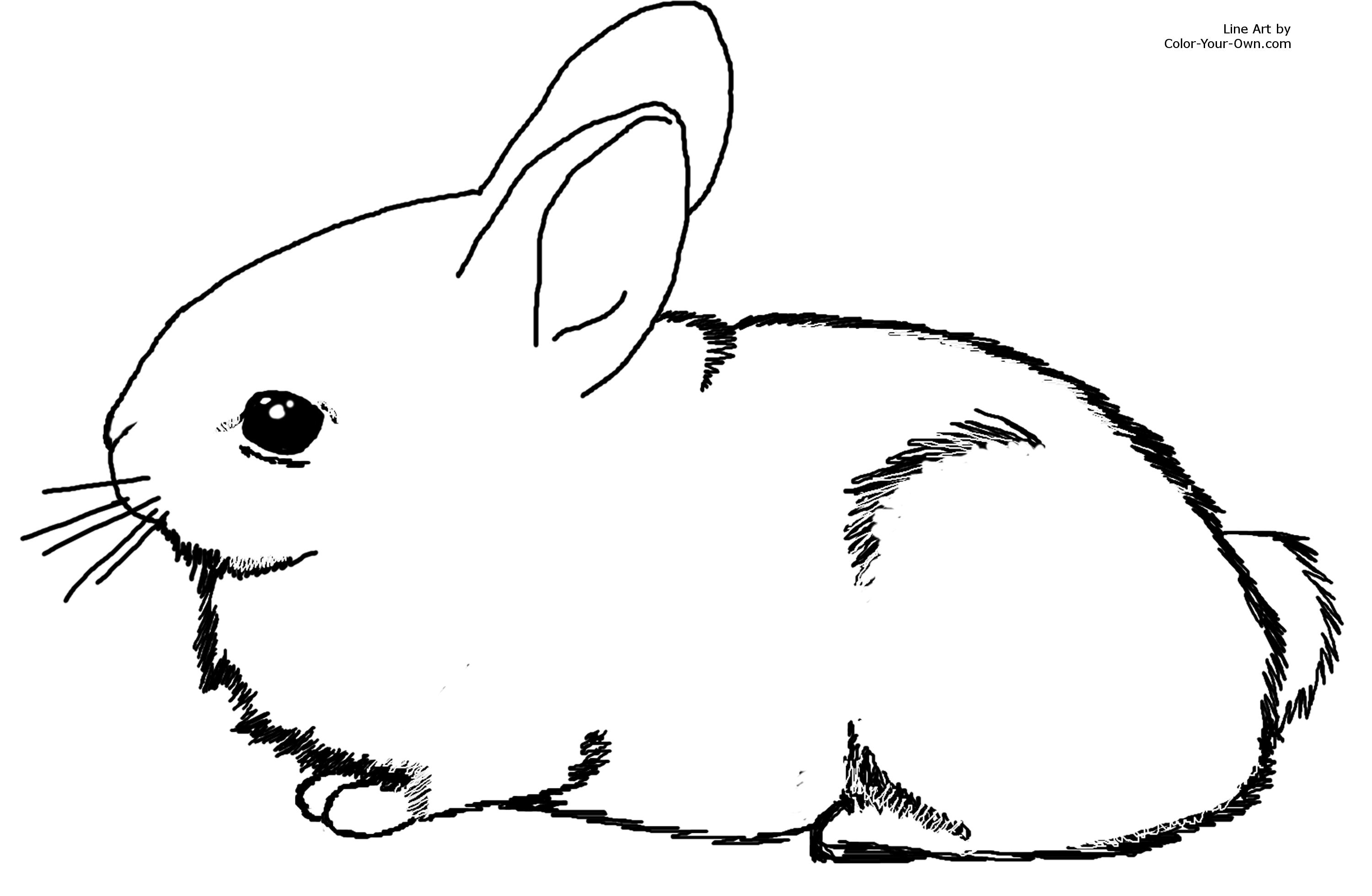 Baby Bunny Coloring Pages - Adorable Baby Cottontail Rabbit Bunny Coloring Page