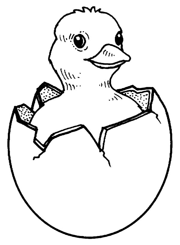 baby chick coloring pages - bird hatching coloring page