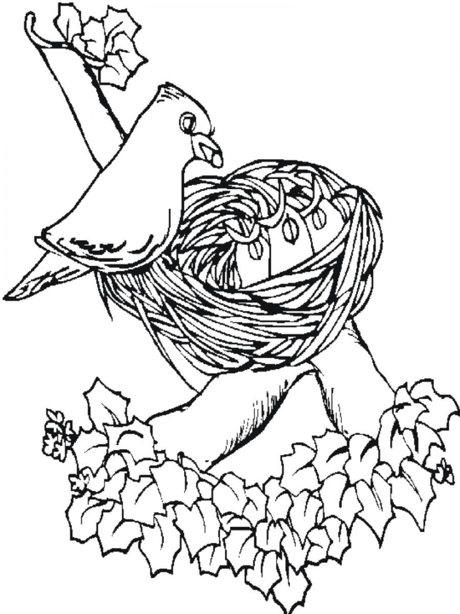 baby chick coloring pages - bird printable coloring pages