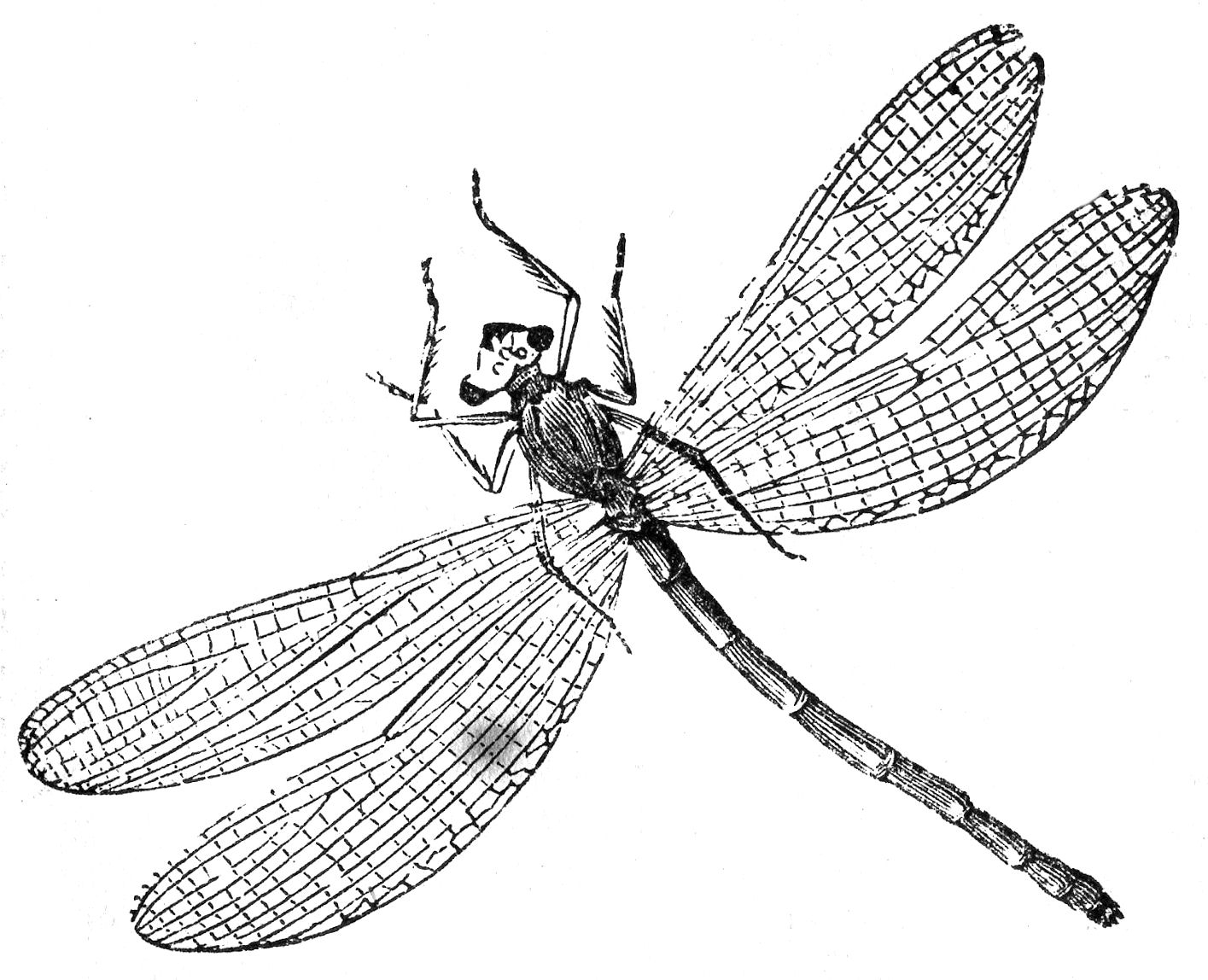 baby fox coloring pages - dragonfly illustrations