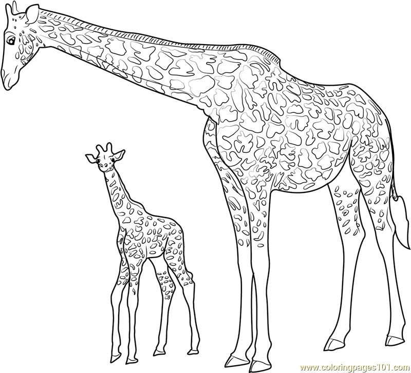 20 Baby Giraffe Coloring Pages Printable | FREE COLORING PAGES - Part 2