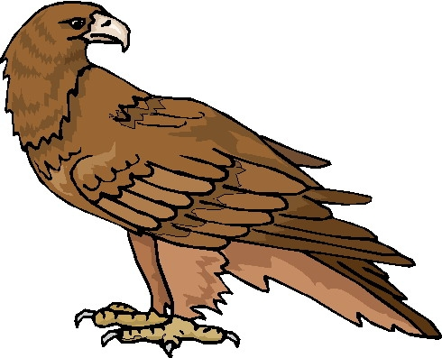 bald eagle coloring page - &p=3