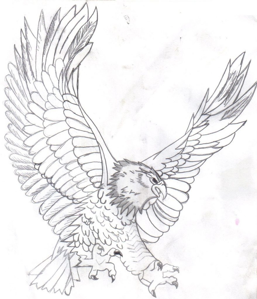 bald eagle coloring page - bald eagle coloring pages