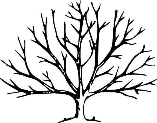 28 Bare Tree Coloring Page Pictures Free Coloring Pages