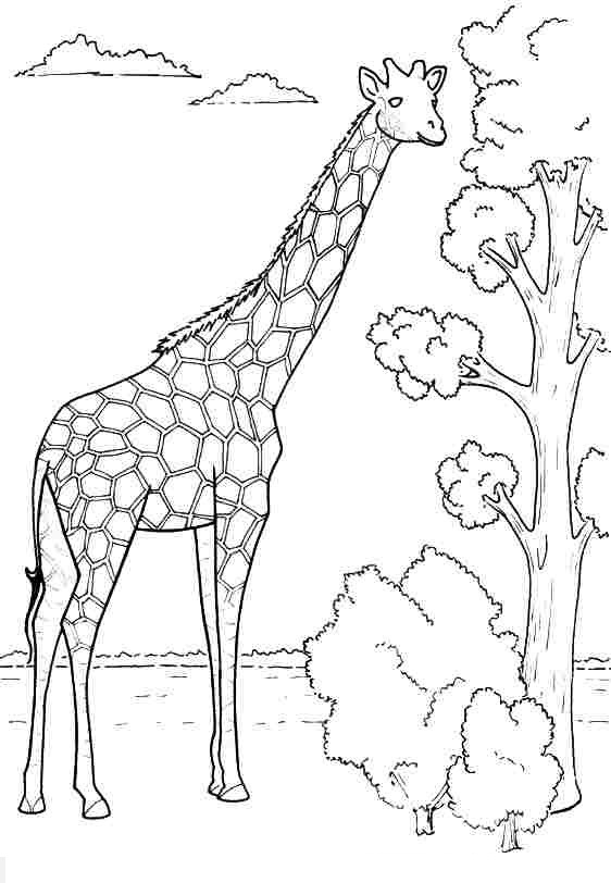 barney coloring pages - tranh mau dang yeu ve huou cao co