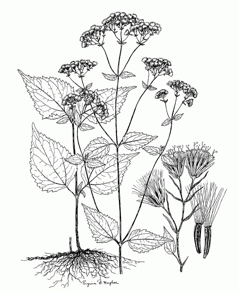 batman coloring pages - botany coloring pages