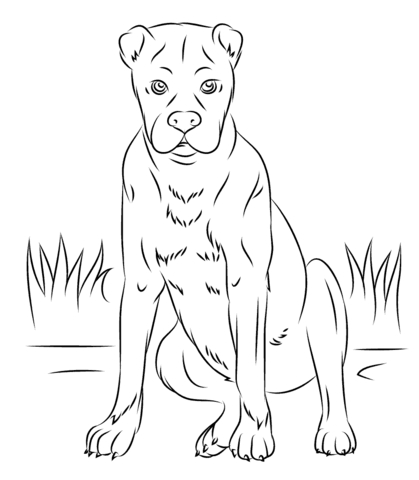 beagle coloring pages - pies bokser