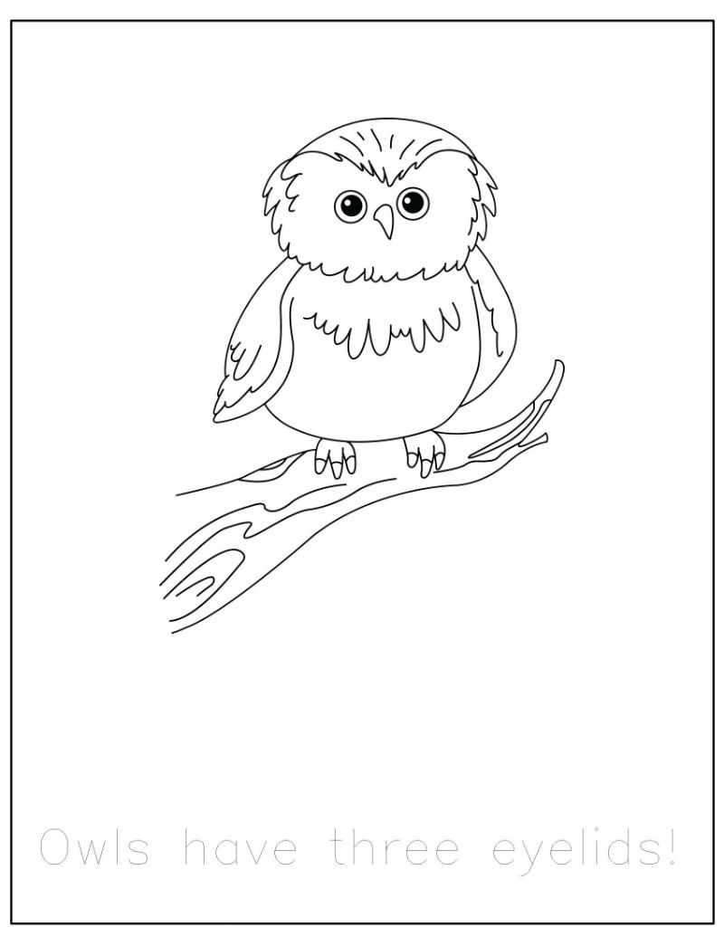 bear coloring pages - free forest animals coloring pages with
