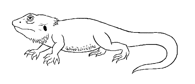 bearded dragon coloring page - bearded dragon coloring 03