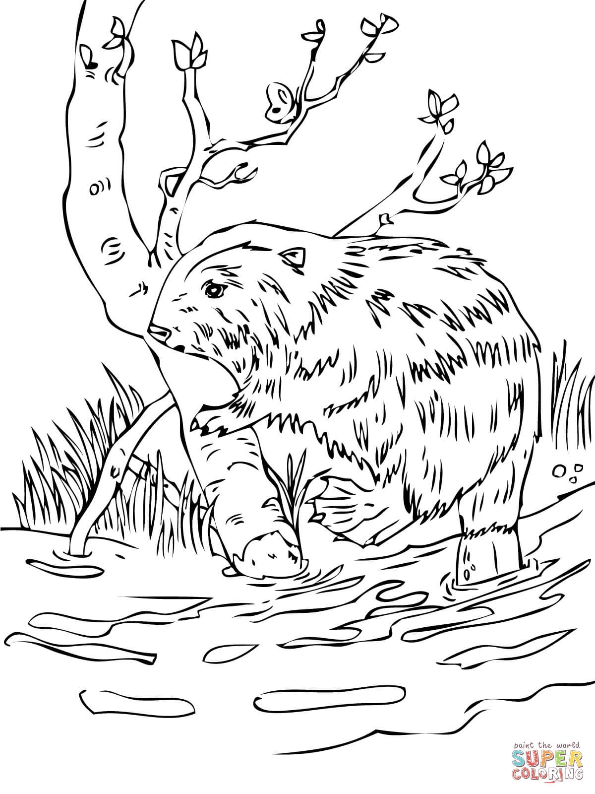 beaver coloring page - beaver 4 2