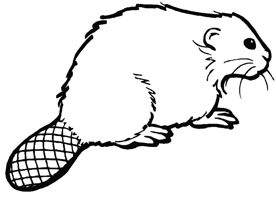 beaver coloring page - beaver