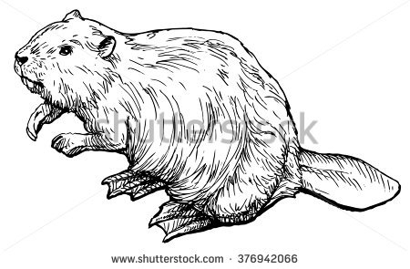 beaver coloring page - beaver vector clipart