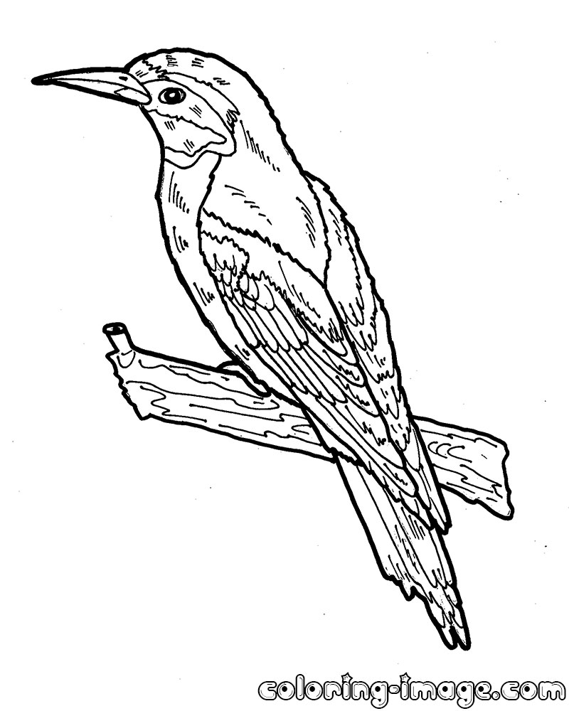 bee coloring pages - european bee eater
