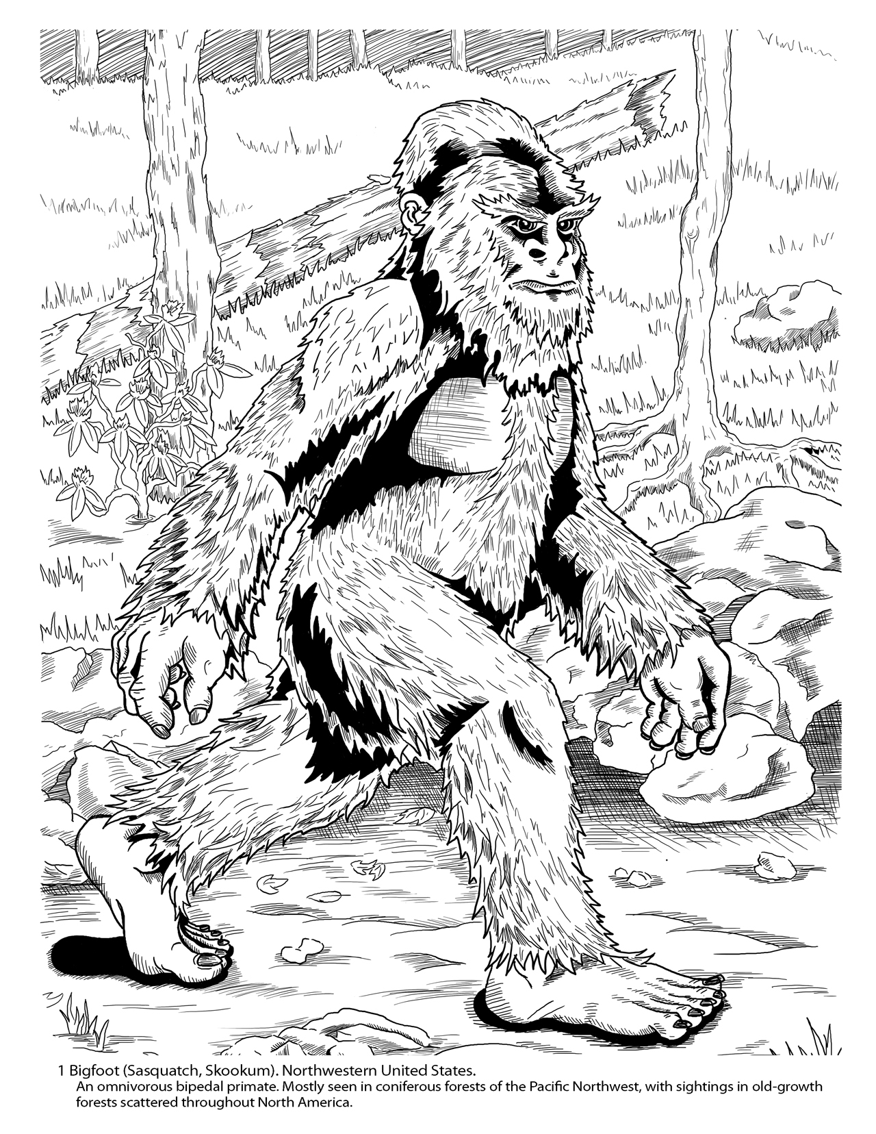 bigfoot coloring page - cryptozoology coloring book