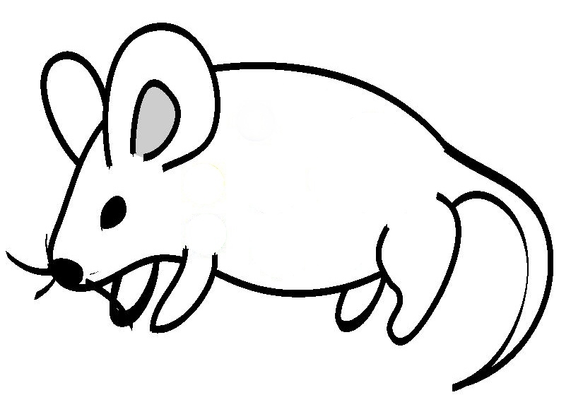 biology coloring pages - line drawing of animals