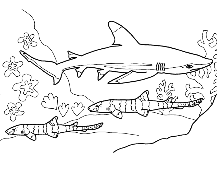 blue coloring pages - blue shark coloring 04