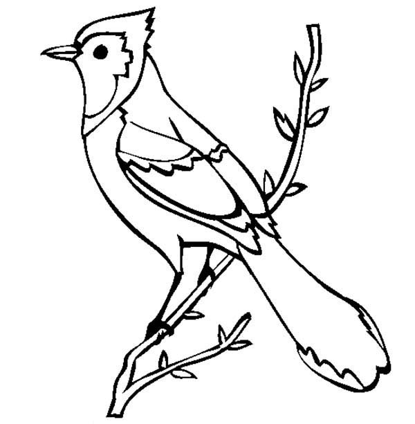 blue jay coloring page - beautiful blue jay bird coloring page 2