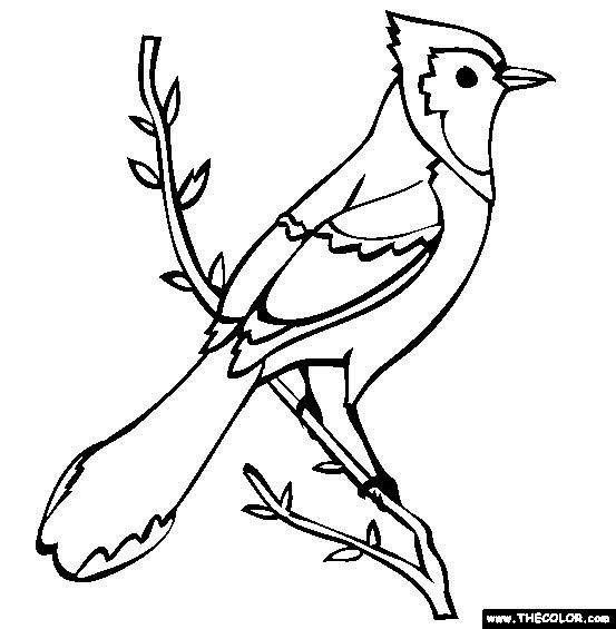 blue jay coloring page -