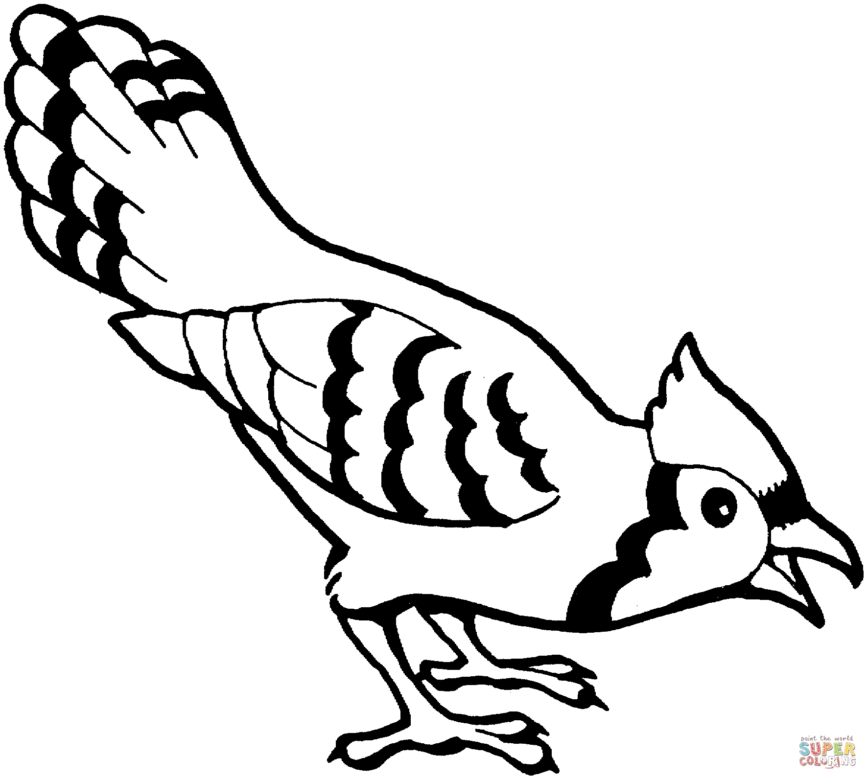 blue jay coloring page - blue jay bird