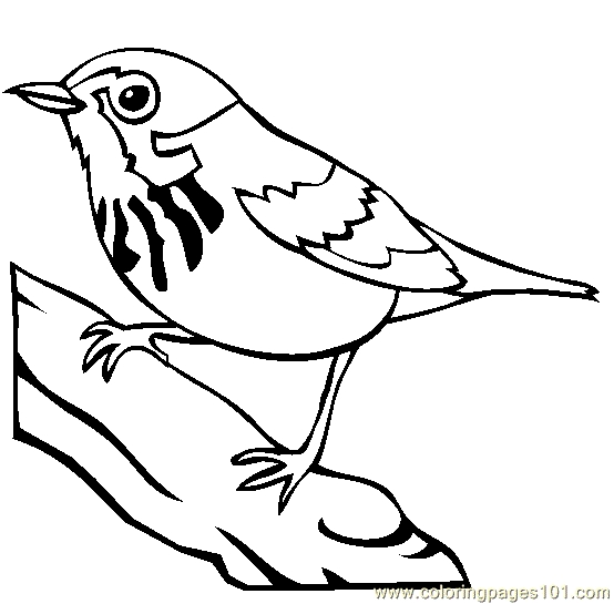 blue jay coloring page - blue jay