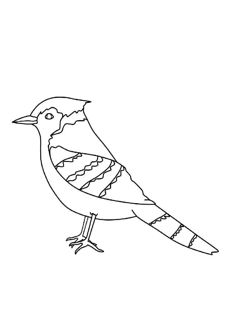 blue jay coloring page - blue jay coloring pages