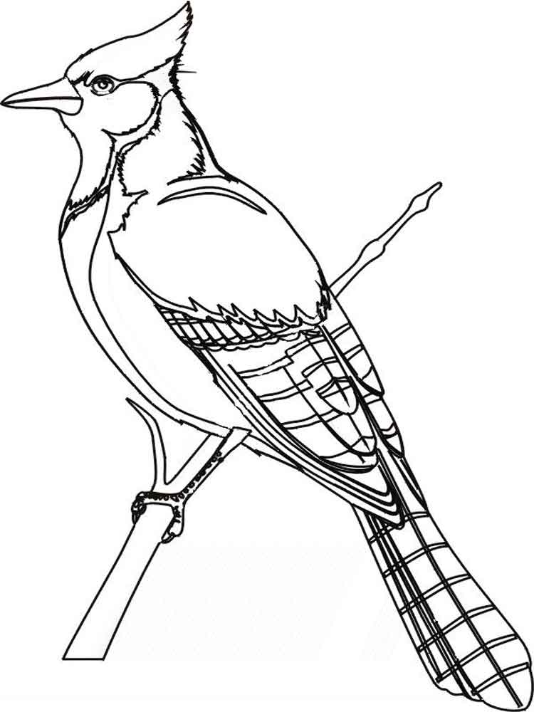 blue jay coloring page - blue jay coloring sheet sketch templates