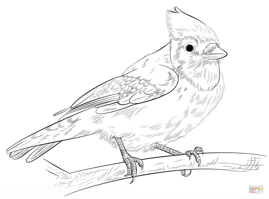blue jay coloring page - blue jay on a branch
