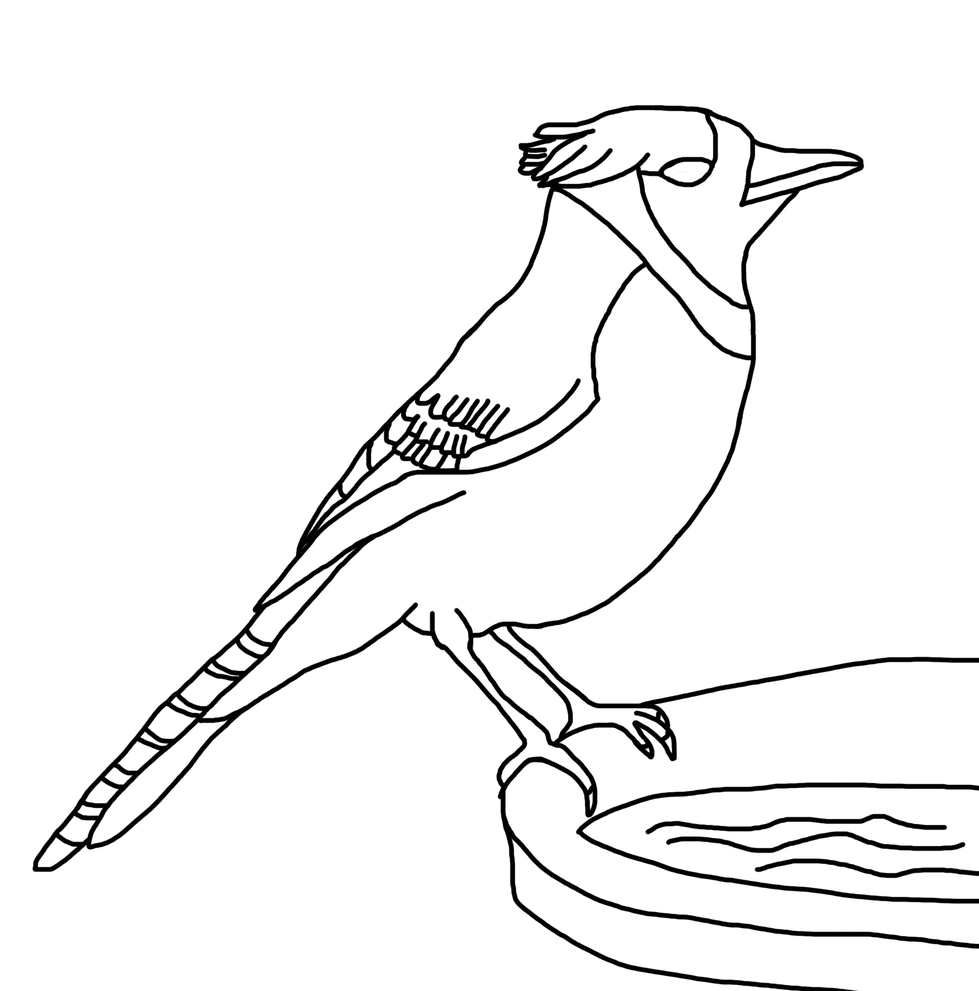 blue jay coloring page - coloring pages