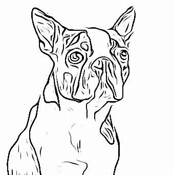 20 Boston Terrier Coloring Pages Pictures | FREE COLORING ...