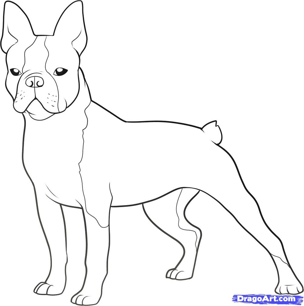 boston terrier coloring pages - boston terrier coloring pages