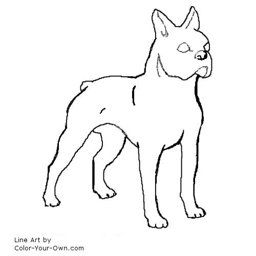 boston terrier coloring pages - dog boston terrier