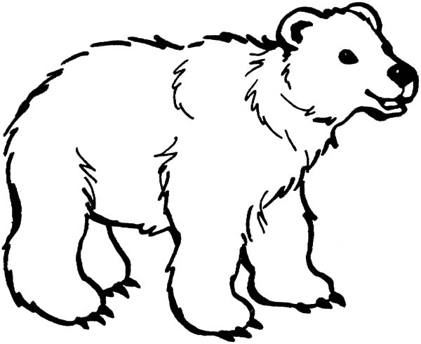 brown bear coloring pages - brown bear coloring