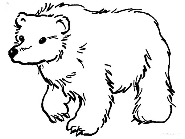 brown bear coloring pages - brown bear looking for food coloring pages 2