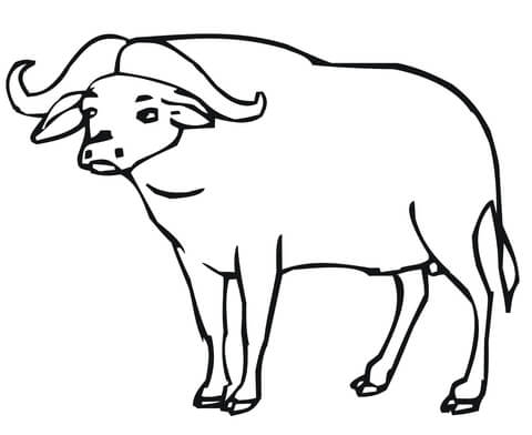 Buffalo Coloring Page - Coloriage Buffle D Afrique