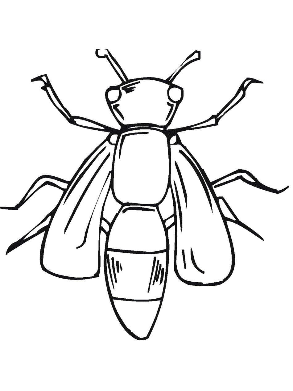 25 Bug Coloring Pages Pictures