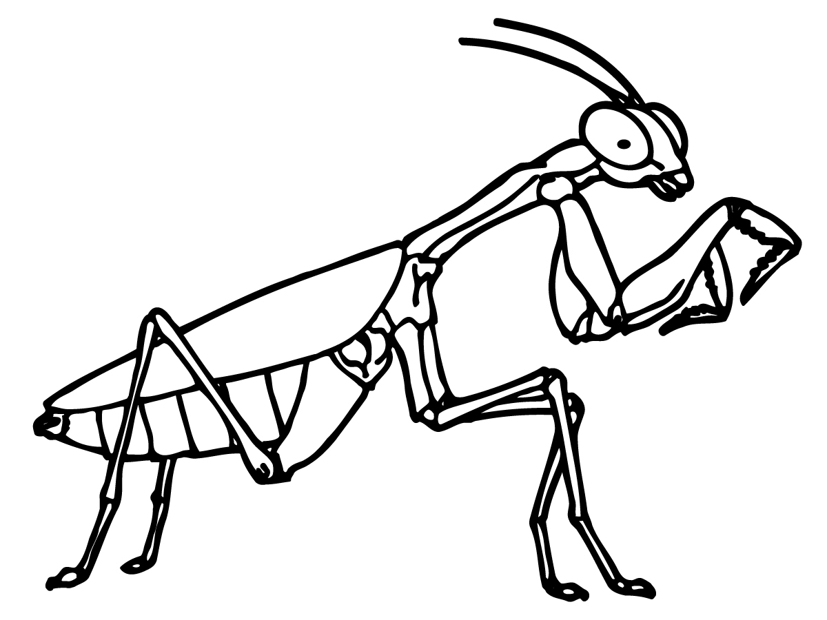 bug coloring pages - printable bug coloring pages
