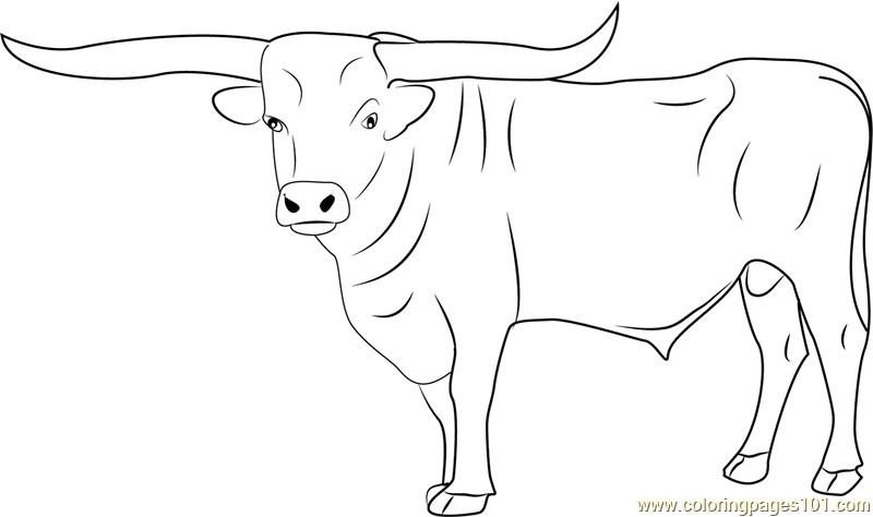bull coloring pages - bull coloring page
