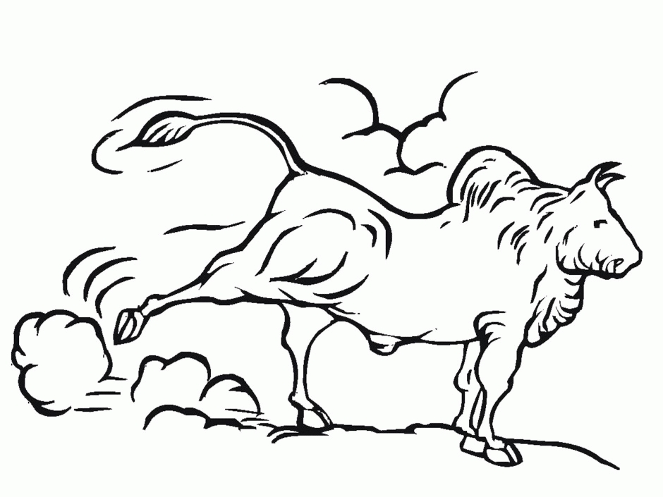 23 Bull Coloring Pages Collections | FREE COLORING PAGES - Part 2