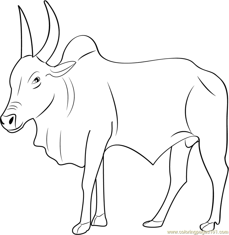 bull coloring pages - kan am bull coloring page