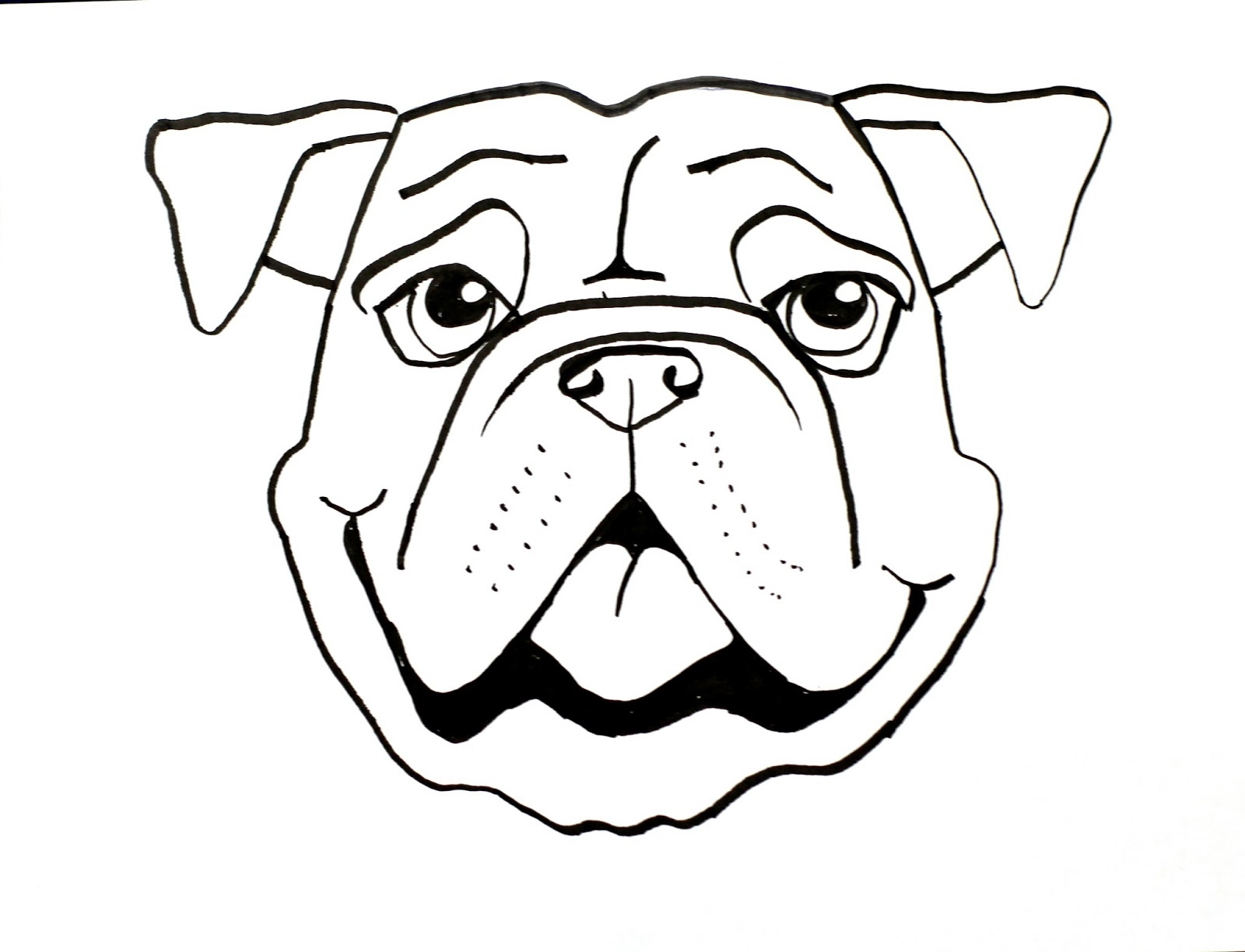 bulldog coloring pages - bull dog draw long