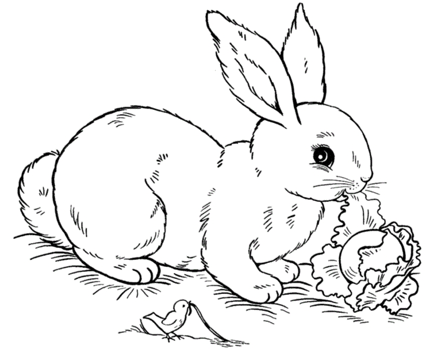 bunny coloring pages free - rabbit coloring pages
