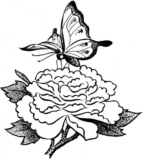 butterfly coloring pages - butterfly on flower drawing