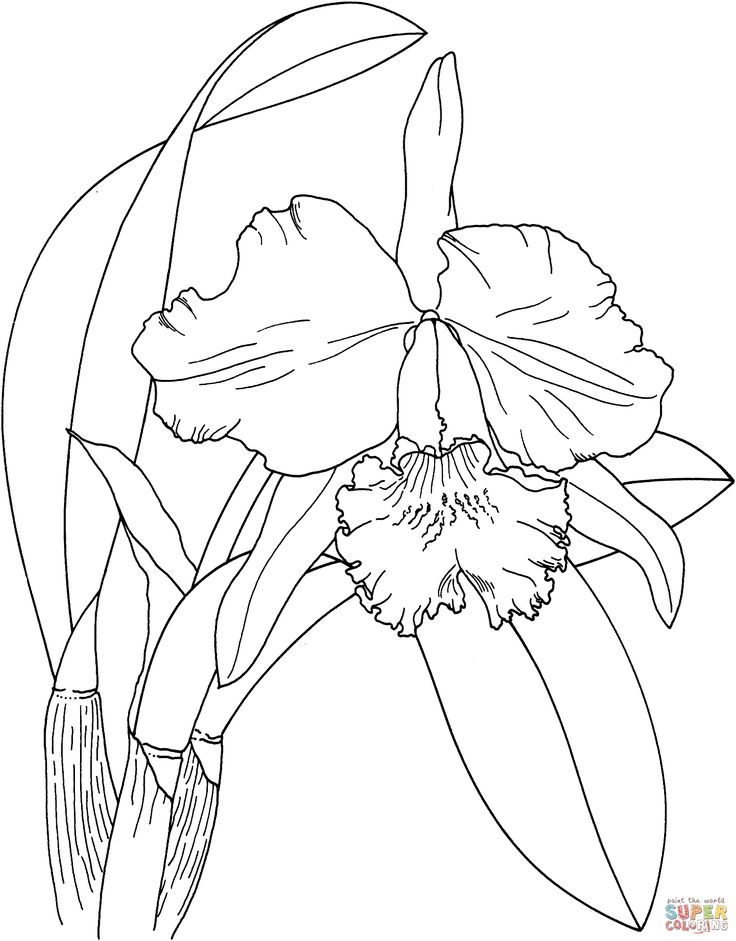 butterfly coloring pages -