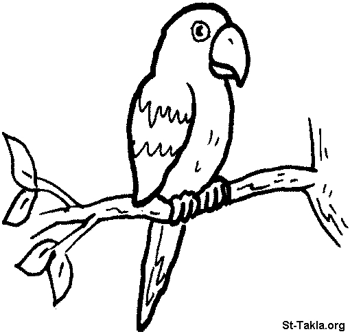 butterfly coloring pages - Coloring 099 Parrot